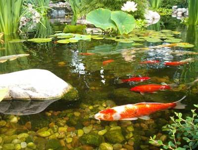 Bioactivator pentru alge iaz sau lac.